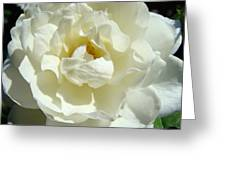 White Rose Art Prints Summer Sunlit Roses Baslee Troutman Greeting Card