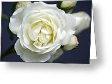 White Rose Bloom Greeting Card