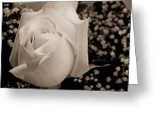 White Rose Bw Fine Art Photography Print Greeting Card