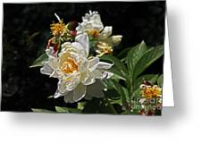 White Rose In Autumn Greeting Card