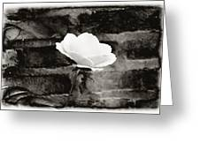 White Rose In Black And White Greeting Card