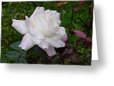 White Rose In Rain Greeting Card
