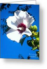 White Rose Of Sharon Hanging Out In The Sky Greeting Card