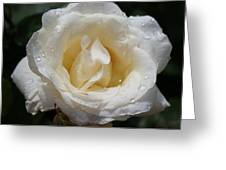 White Rose With Dew Drops Greeting Card