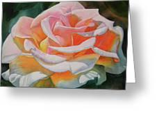 White Rose With Orange Glow Greeting Card