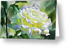 White Rose With Yellow Glow Greeting Card