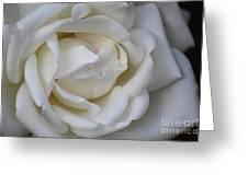 White Rose2 Greeting Card