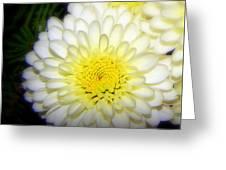 White Ruffles Greeting Card
