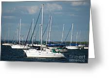 White Sailboats Greeting Card