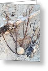 White Sand Beach Finds Greeting Card