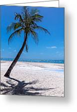 White Sand Beaches And Tropical Blue Skies Greeting Card
