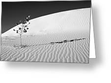 White Sands 4 Greeting Card