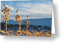White Sands Yucca Row Greeting Card