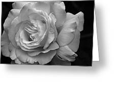 White Simplicity Rose Macro Greeting Card