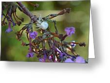 White Spider In Butterfly Bush Greeting Card