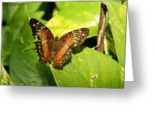 White Spotted Butterfly Greeting Card
