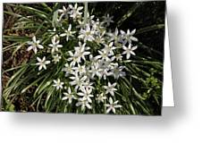White Spring Flowers Greeting Card