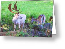 White Stag And Hind 2 Greeting Card