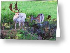 White Stag And Hind Greeting Card