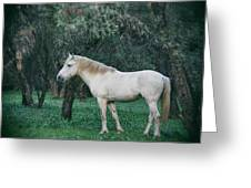 White Stallion In The Woods  Greeting Card