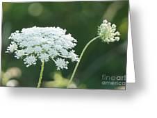 White Starbursts Greeting Card