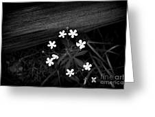 White Stars Greeting Card