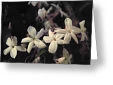 White Stars Greeting Card