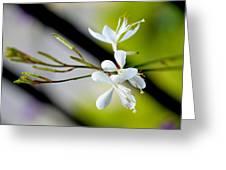White Stem Flowers Greeting Card