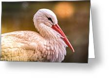White Stork Greeting Card