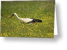White Stork Looking For Frogs Greeting Card