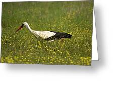 White Stork Looking Fr Frogs Greeting Card