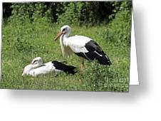 White Storks Greeting Card by Teresa Zieba