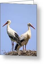 White Storks Greeting Card by Wim Lanclus