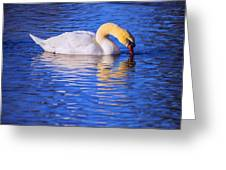 White Swan Drinking Water In A Pond Greeting Card