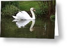 White Swan In Belgium Park Greeting Card