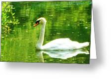 White Swan Swim In Pond Greeting Card