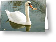 White Swan With Reflection Greeting Card
