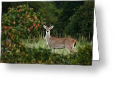 White-tail Buck Through The Trees Greeting Card