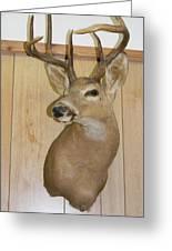 White Tail Buck Greeting Card