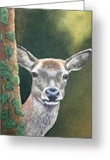 White Tail Doe At Ancon Hill Greeting Card