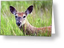 White Tail Doe Greeting Card