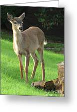 White-tail Fawn Greeting Card
