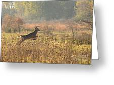 White Tail Morning Greeting Card