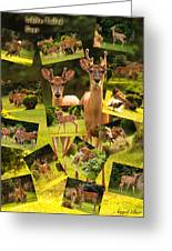 White-tailed Collage Greeting Card