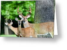 White-tailed Deer Family Greeting Card
