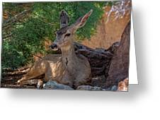 White-tailed Deer H1829 Greeting Card