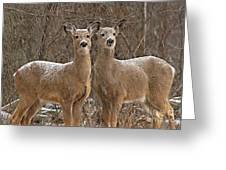 White-tailed Deer Pair Peering Out From Snowstorm Greeting Card