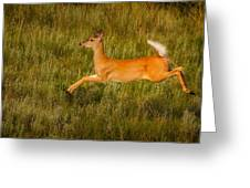White-tailed Doe Leaping Greeting Card