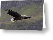 White-tailed Eagle Approaches Greeting Card