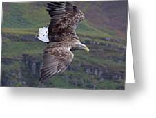White-tailed Eagle Banks Greeting Card
